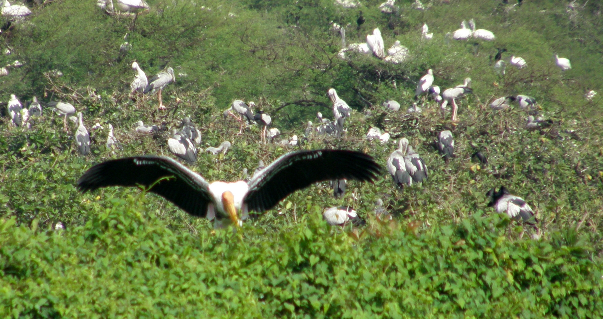 Bharatpur Bird Sanctuary, Bird Watching Tour package India
