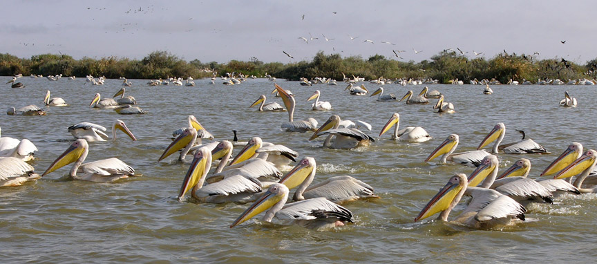 Bharatpur bird sanctuary, Bird Wathcing India Tour