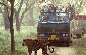 Canter Safari, India Adventure Travel