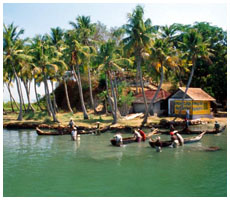 Cochin, wildlife of south india