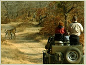 Corbett Safari, Tiger & Birds Tour