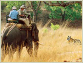 Elephant Safari, india adventure travel