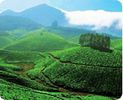Munnar, Best Hill stations in Kerala