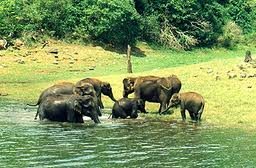 Periyar Wildlife Sanctuary, Hill Station Tours in india