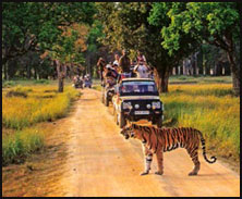 Kanha National Park, Wildlife in North India