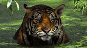 Tiger, wildlife Tours in india